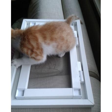 Kedi sinekliği